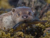 Otter by Mick Durham