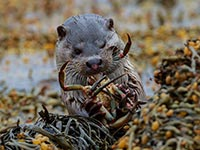 Otter by Dave Potter