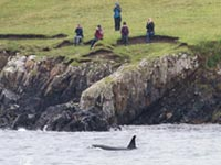 Our group watching Orcas by Hugh Harrop